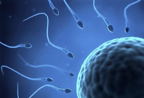 infertilità-maschile